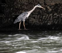 Suir River Heron von John McCoubrey