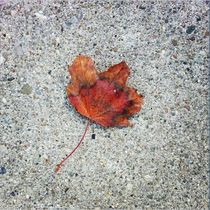 Grounded Leaf von Heather Winter