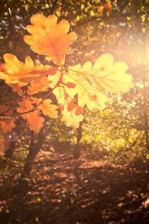 Autumn-0031