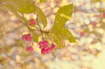 Soft Pink  Spindle berries von Dawn Cox