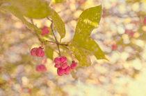 Autumn-0060-1