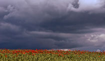 Storm over  Poppy field von Dawn Cox