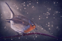 'The little robin at the night' by AD DESIGN Photo + PhotoArt