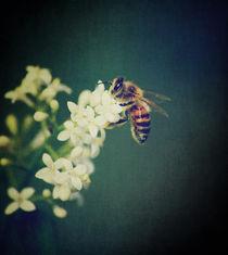 The bee von Sarah C. Frerich