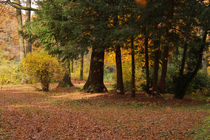 Herbsttag von AD DESIGN Photo + PhotoArt