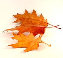Herbstlaub von Kerstin Runge