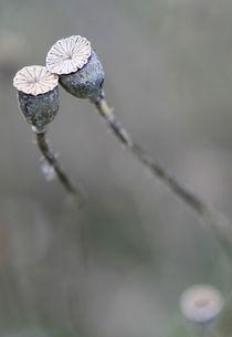 Mohnblüten by Jens Berger