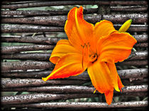 Fences and flowers nr.2 by Leopold Brix