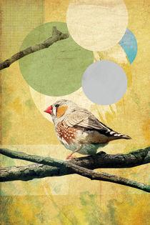 Bird Song von Rachael Shankman
