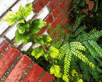 Plant and Fern against Bricks by cdigitalv