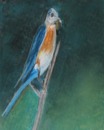 Birdie-001