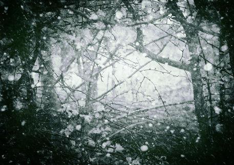 Winterwood-c-sybillesterk