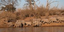 2012-botswana-linyanti-river-chobe-np-elephant-herd-44