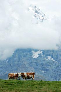 Schweizer Kühe von Bettina Schnittert
