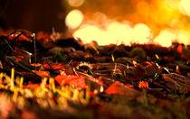 Forest floor von Dawn Cox