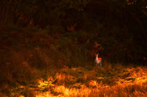 Deer in the Countryside by Dawn Cox