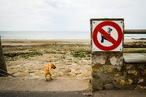 No to poodles? von Gerry Walden