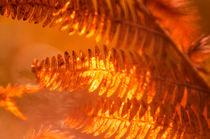 Golden Ferns by Dawn Cox