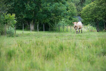 Rural landscape by Lars Hallstrom