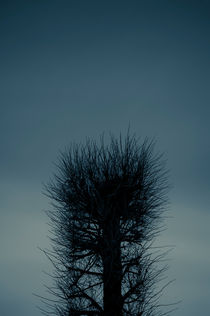 Twilight Tree by Lars Hallstrom