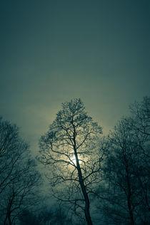 Strange day in the woods by Lars Hallstrom