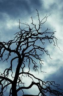 Tree of death by Lars Hallstrom