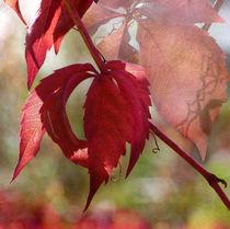 Herbstfreude by Franziska Rullert