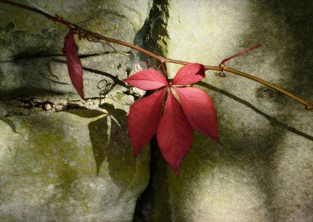 Wall-autumn