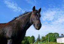Tullyhommon Horse von John McCoubrey