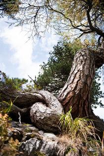Roots by Katarzyna Körner