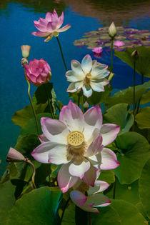Lotus Pool von Chris Lord