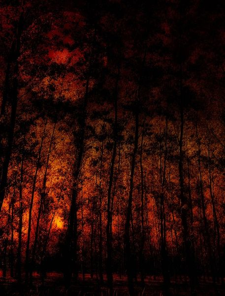Autumn-in-the-magic-forest-herbst-im-zauberwald-watermarked-large