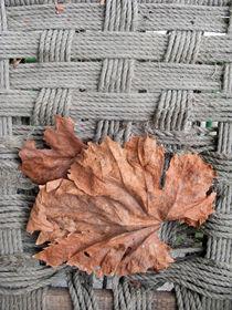 Autumn von Steve Outram
