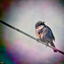 A Bird On A Wire by Chris Lord
