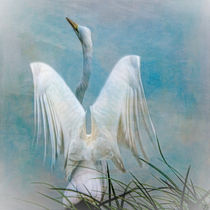 Angelic Egret  von Chris Lord