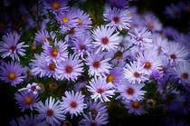 Blumengruß von Barbara  Keichel
