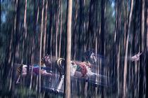 Waldpferde by pahit
