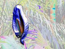 Flora Hermaphroditae Vulgaris by Paul Artner