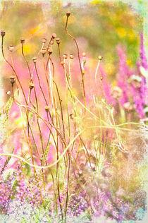 Meadow flowers von Dawn Cox