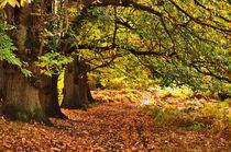 Autumn walk by Dawn Cox