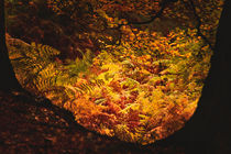 Autumn-knole-0093
