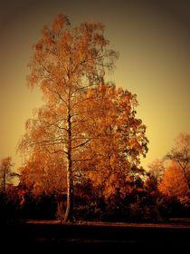 Goldener Herbst von Elke Balzen