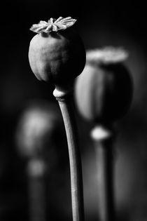 opium by Jaromir Hron