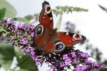 Schmetterling  by Viviane Lafrenz