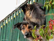 Hundewache by badauarts