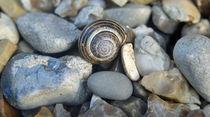 Snail Stones von Victoria Wise
