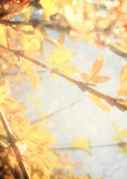 Sunlight-c-sybillesterk