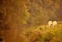 Country Living von Dawn Cox