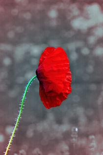 Poppy von Doug McRae