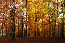 Forest autum by fotograf